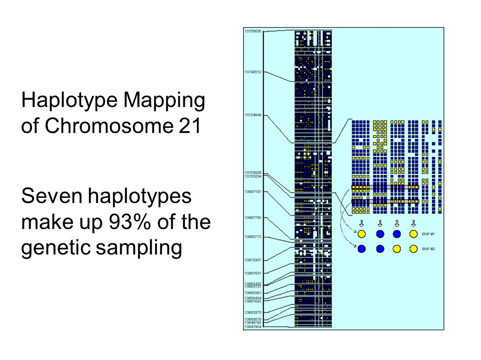 Haplotype Mapping of Chromosome 21