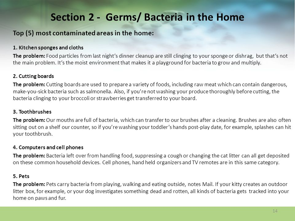 Section 2 - Germs/ Bacteria in the Home