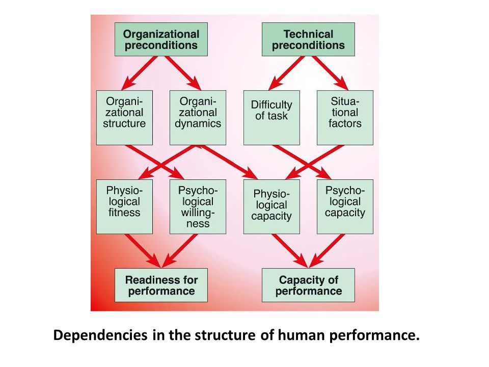 Dependencies in the structure of human performance.