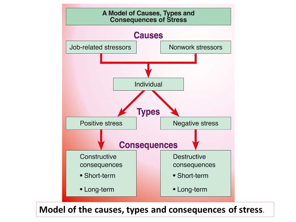 Model of the causes, types and consequences of stress.