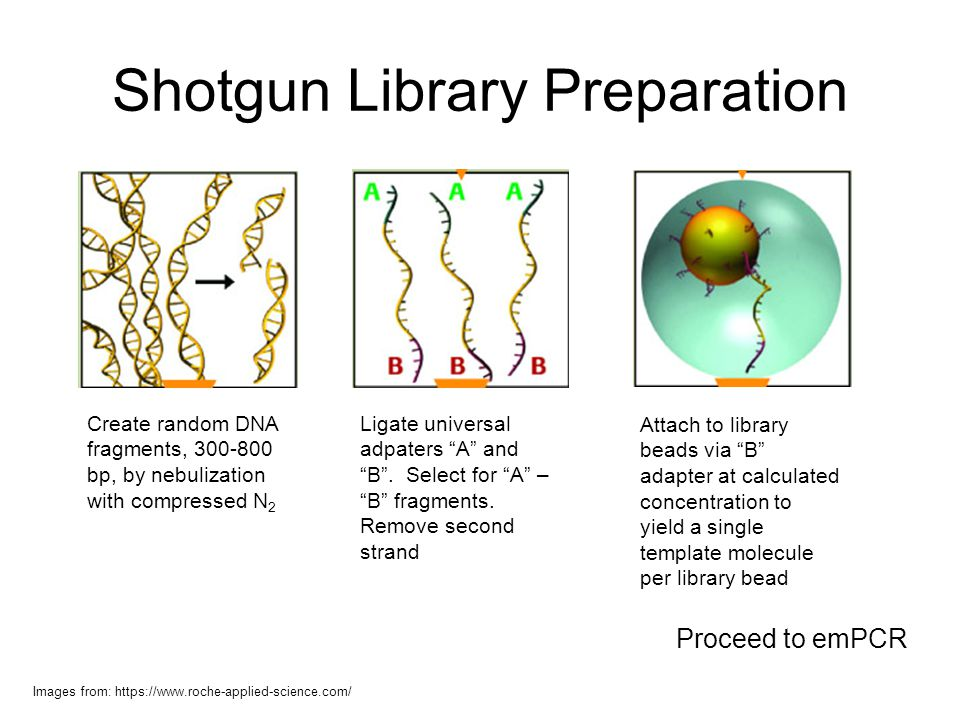 Shotgun Library Preparation