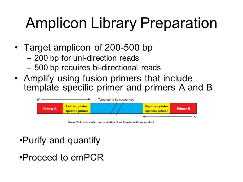 Amplicon Library Preparation