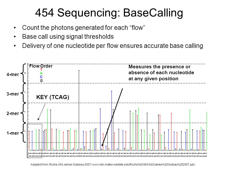 454 Sequencing: BaseCalling