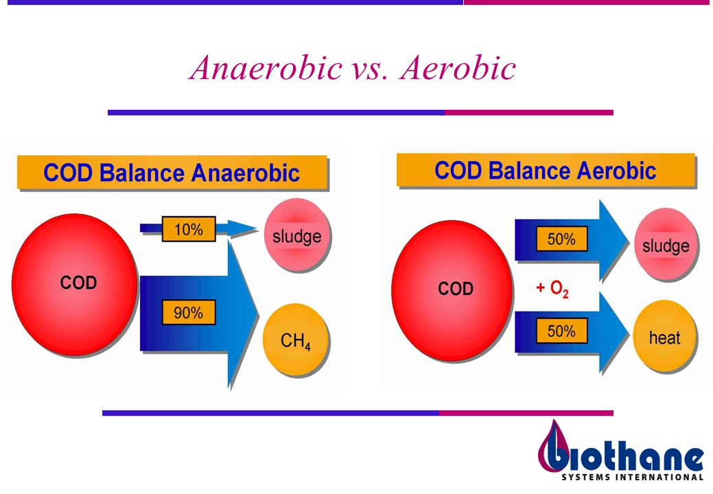 Anaerobic vs. Aerobic