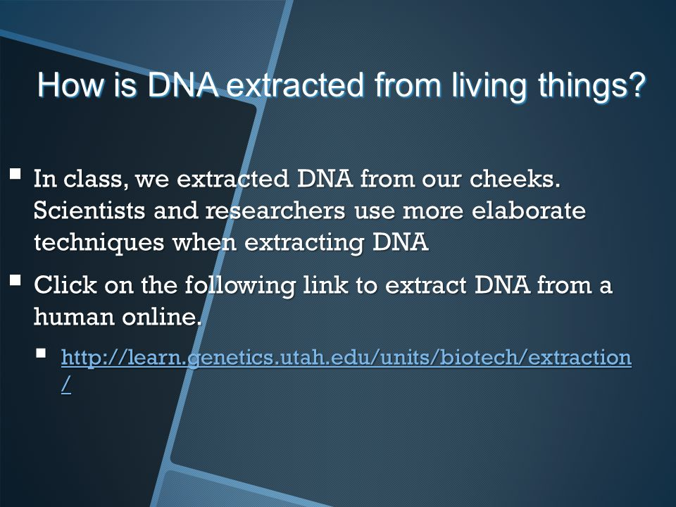 How is DNA extracted from living things