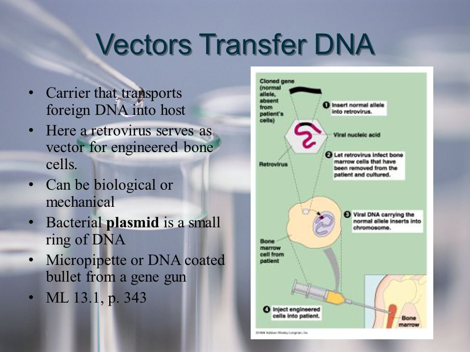 Vectors Transfer DNA Carrier that transports foreign DNA into host