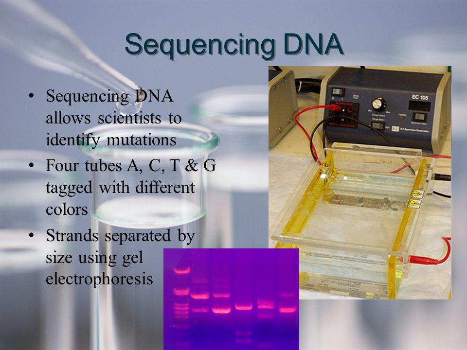 Sequencing DNA Sequencing DNA allows scientists to identify mutations