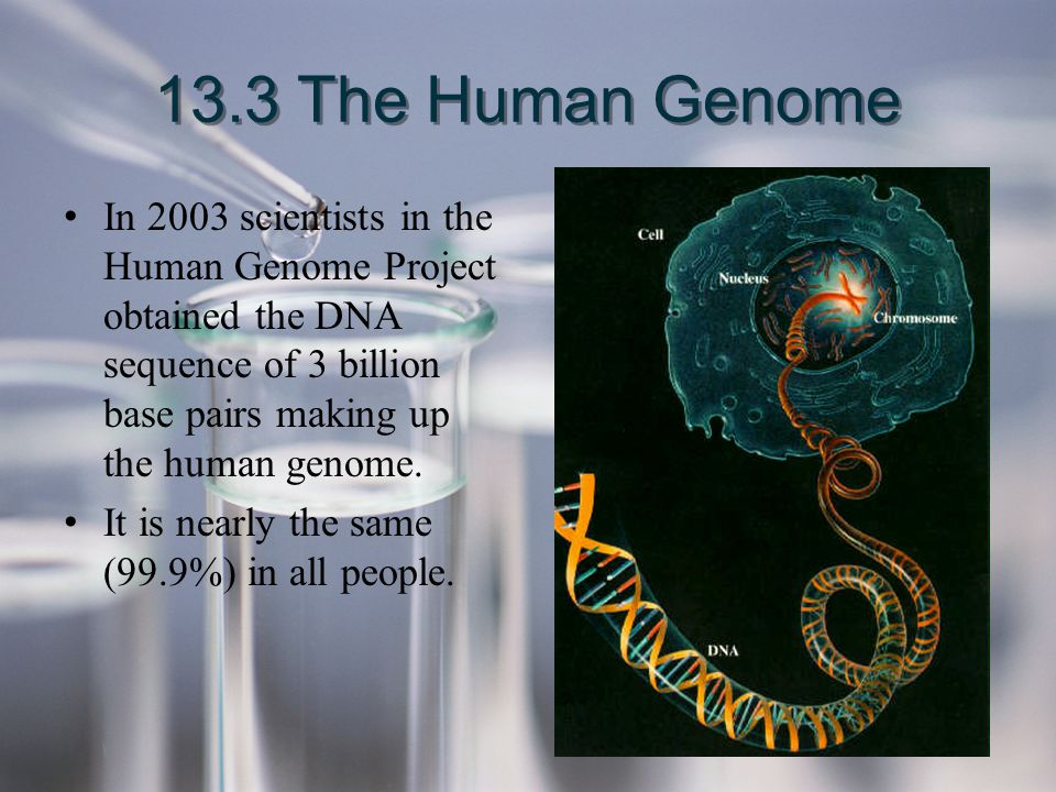 13.3 The Human Genome In 2003 scientists in the Human Genome Project obtained the DNA sequence of 3 billion base pairs making up the human genome.
