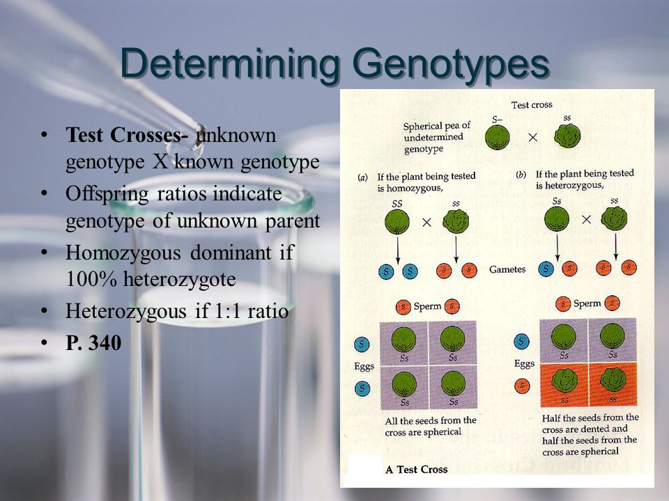 Determining Genotypes