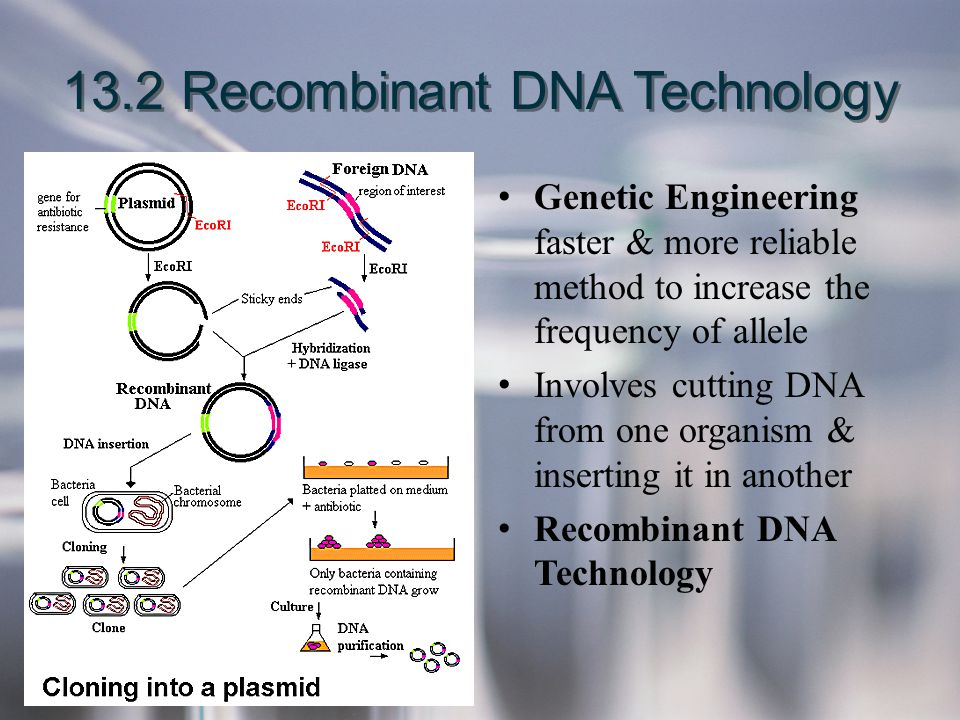 13.2 Recombinant DNA Technology