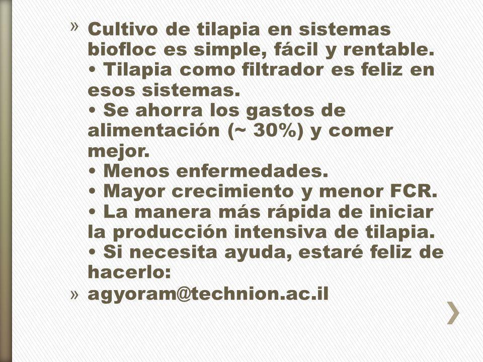 Cultivo de tilapia en sistemas biofloc es simple, fácil y rentable
