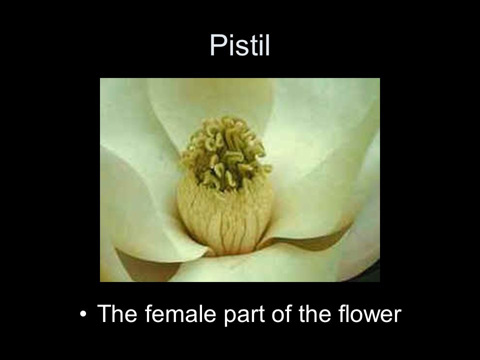 The female part of the flower