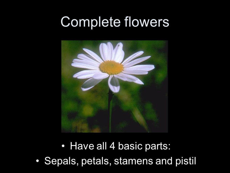 Sepals, petals, stamens and pistil