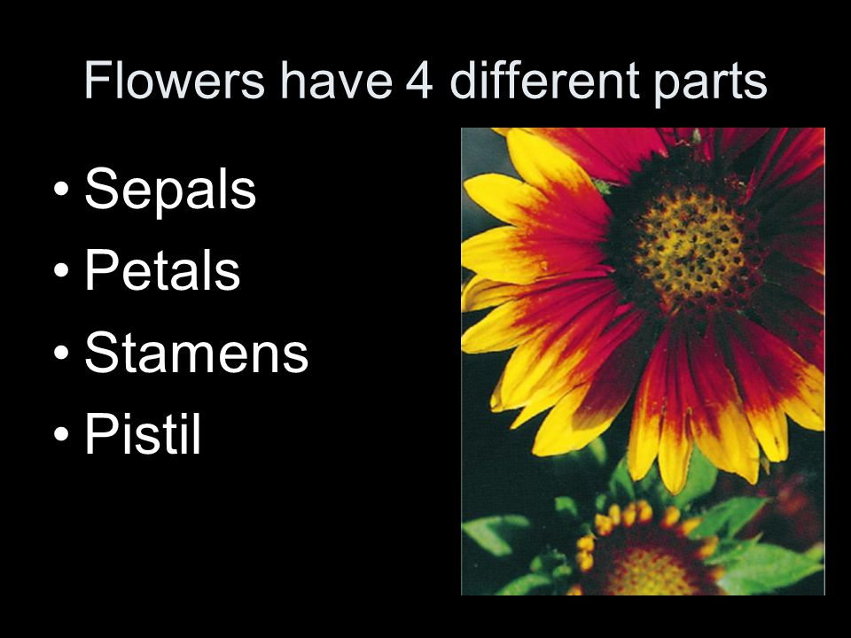 Flowers have 4 different parts