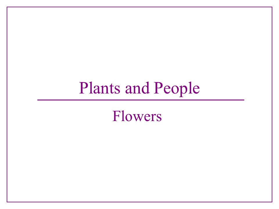 Plants and People Flowers