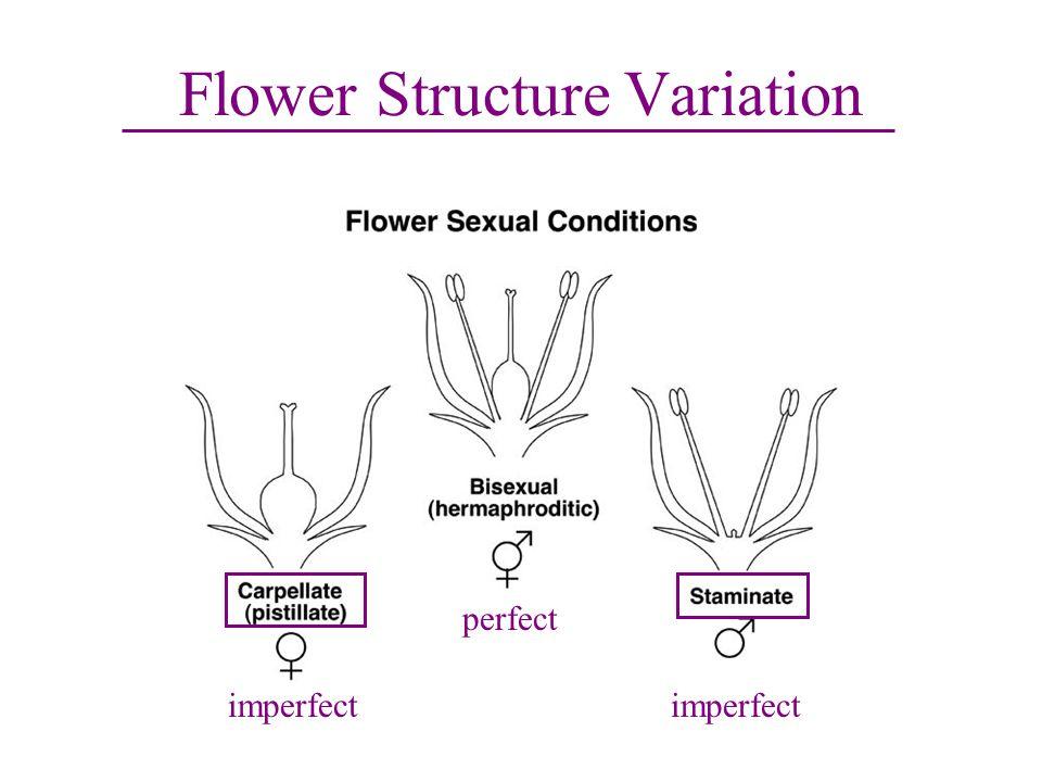 Flower Structure Variation