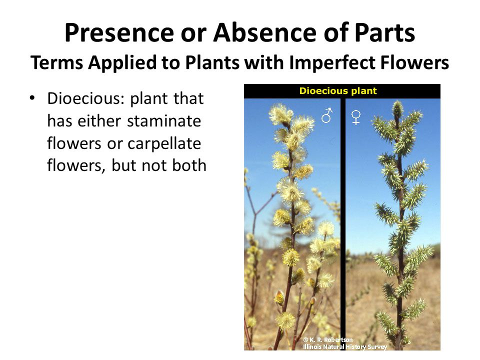 Presence or Absence of Parts Terms Applied to Plants with Imperfect Flowers