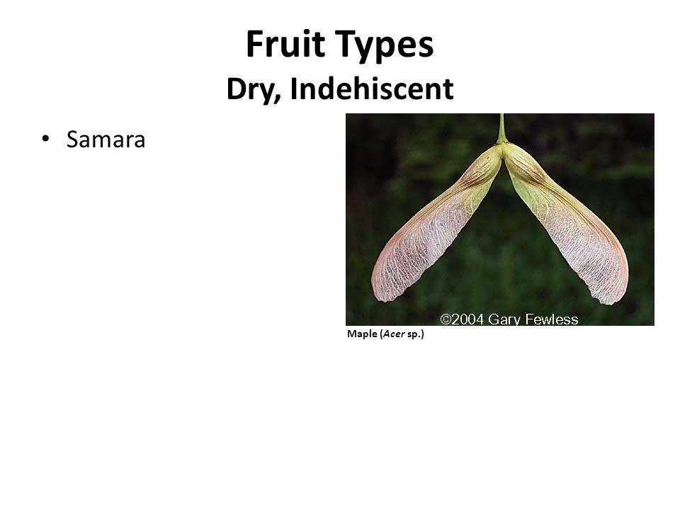 Fruit Types Dry, Indehiscent