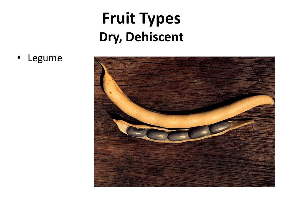 Fruit Types Dry, Dehiscent
