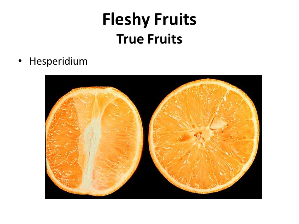 Fleshy Fruits True Fruits