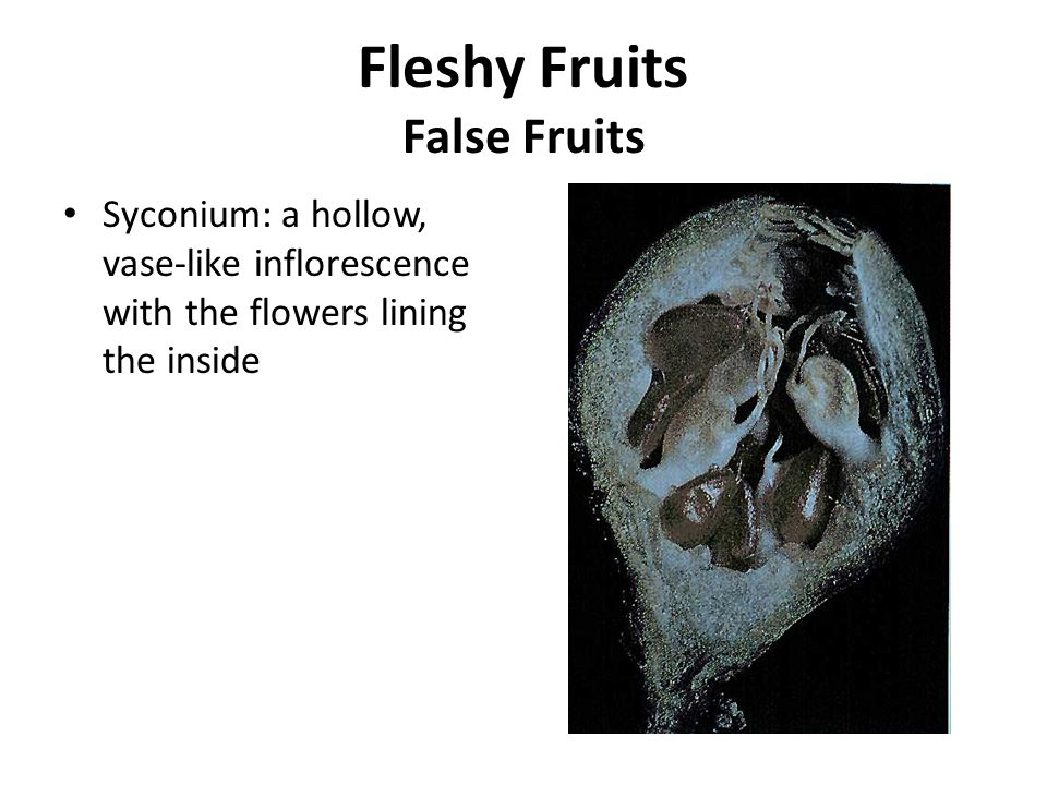 Fleshy Fruits False Fruits