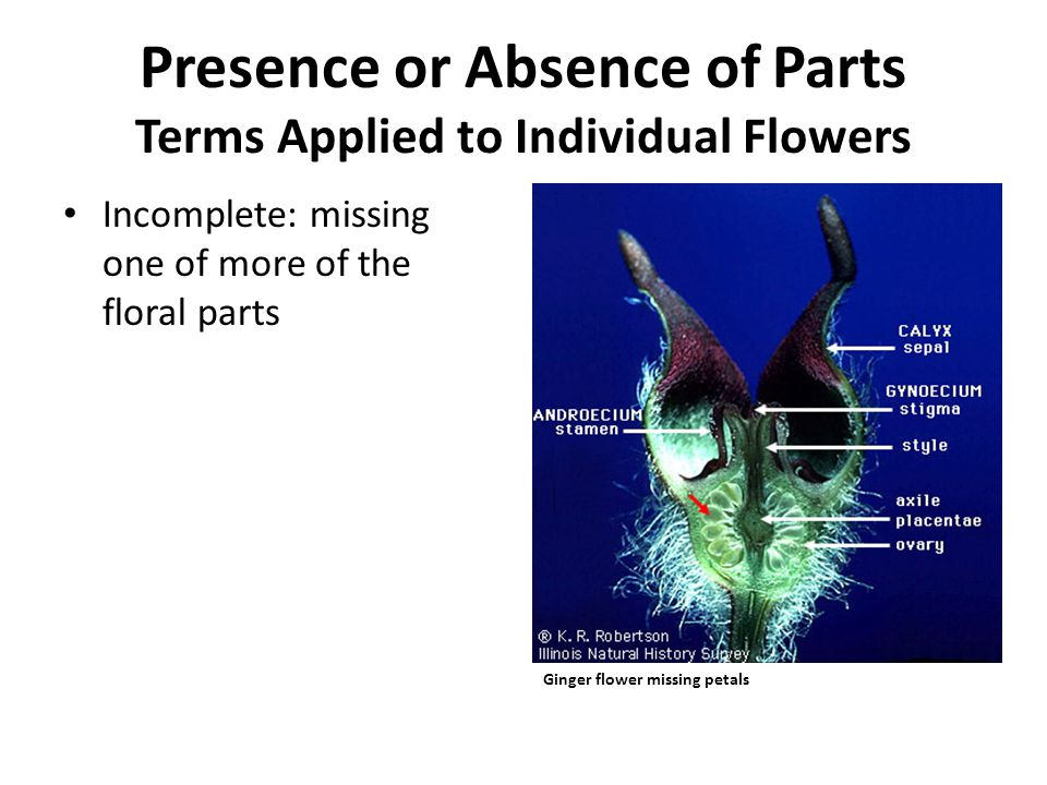 Presence or Absence of Parts Terms Applied to Individual Flowers