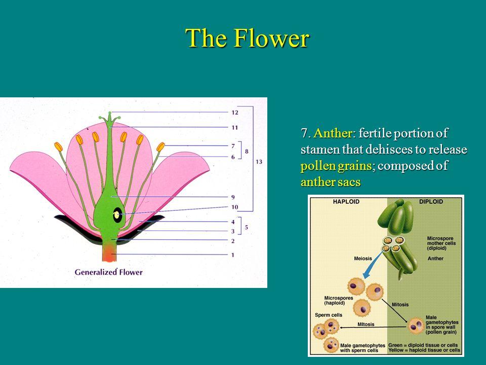 The Flower 7.
