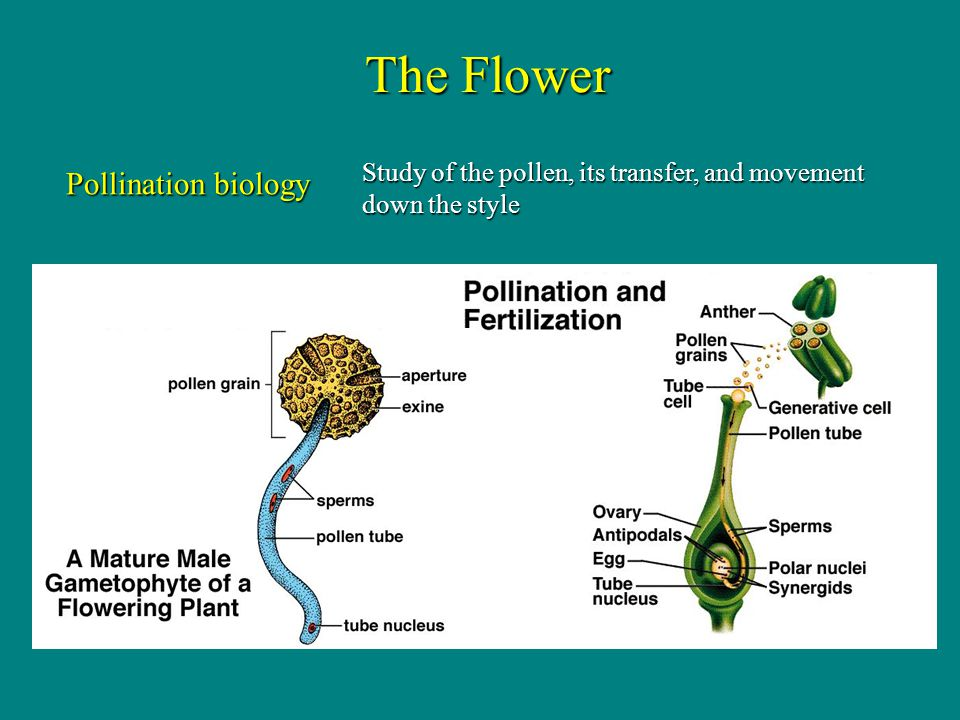 The Flower Pollination biology