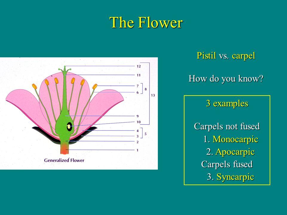 The Flower Pistil vs. carpel How do you know 3 examples