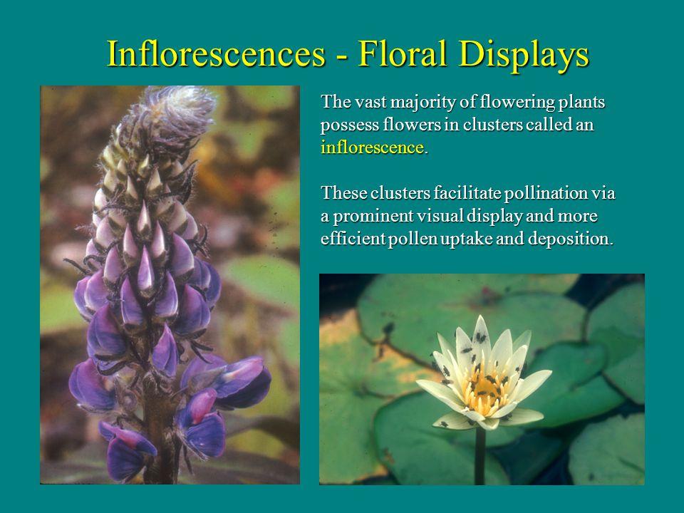 Inflorescences - Floral Displays