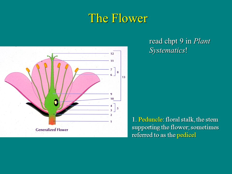 The Flower read chpt 9 in Plant Systematics!