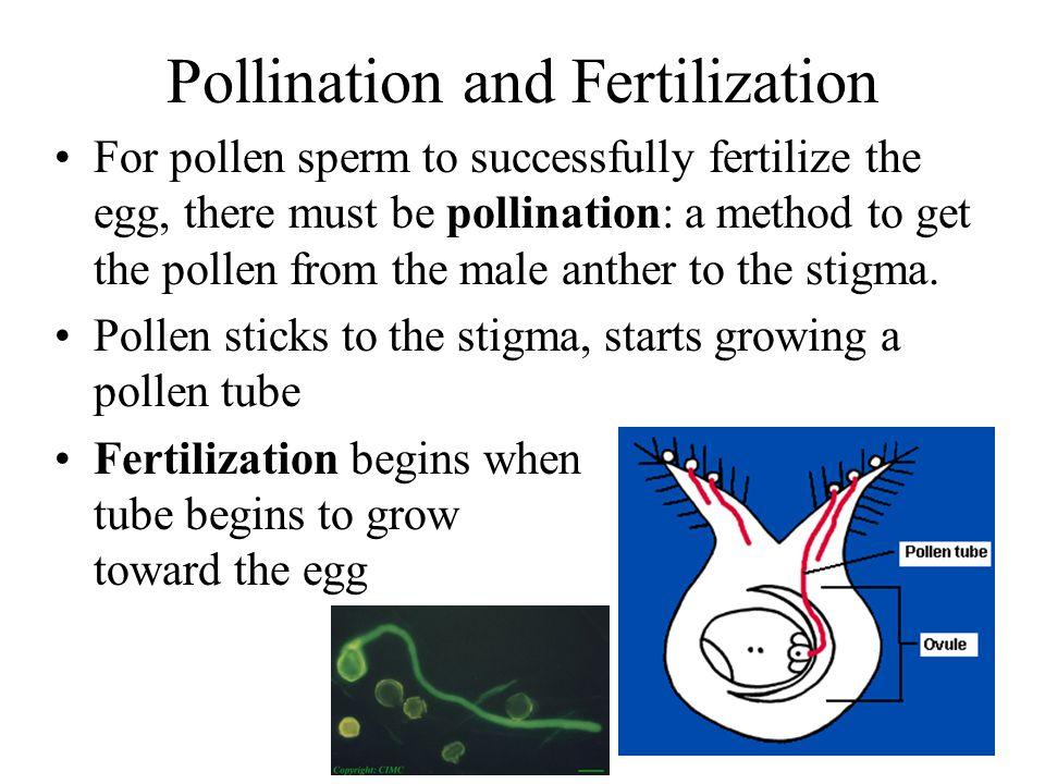 Pollination and Fertilization