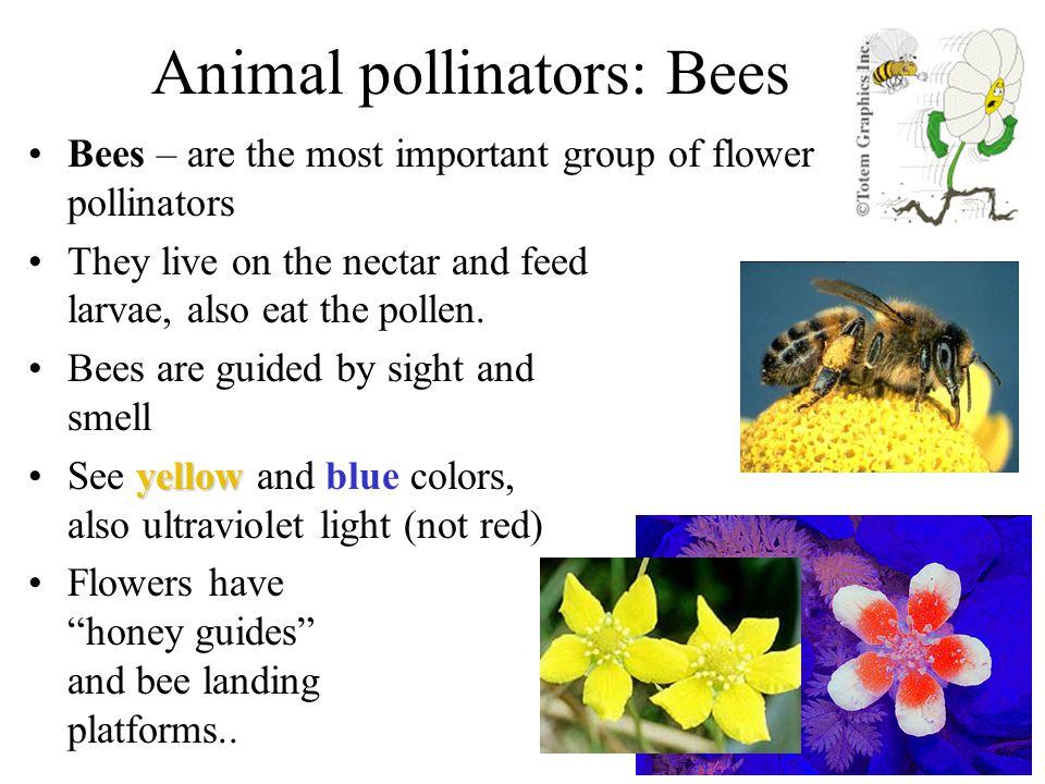 Animal pollinators: Bees