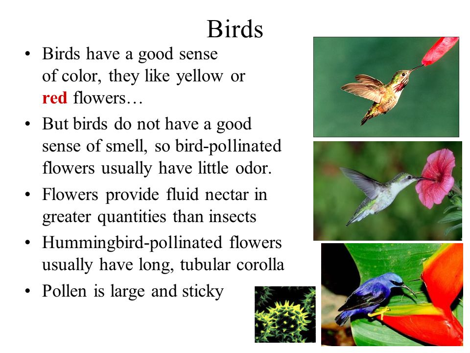 Birds Birds have a good sense of color, they like yellow or red flowers…