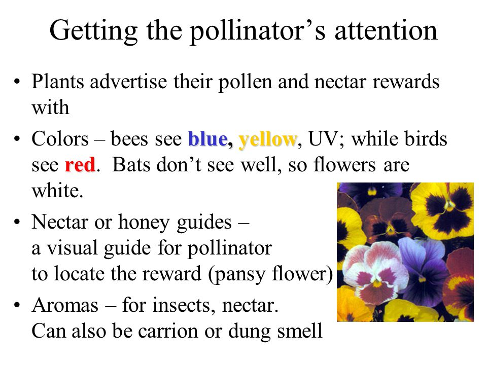 Getting the pollinator's attention