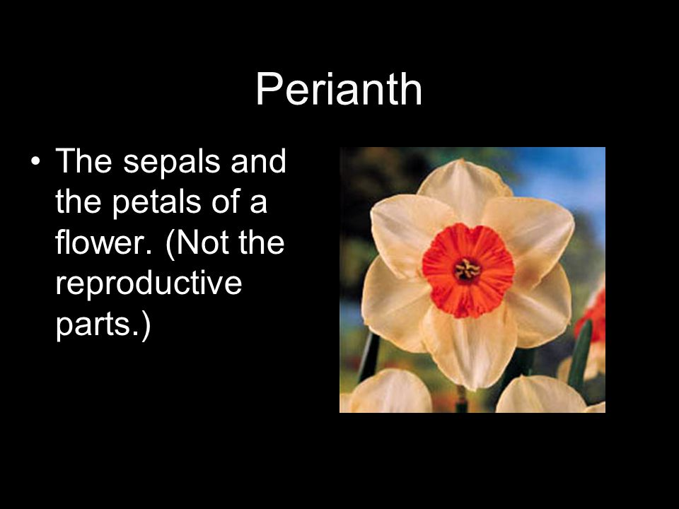 Perianth The sepals and the petals of a flower. (Not the reproductive parts.)