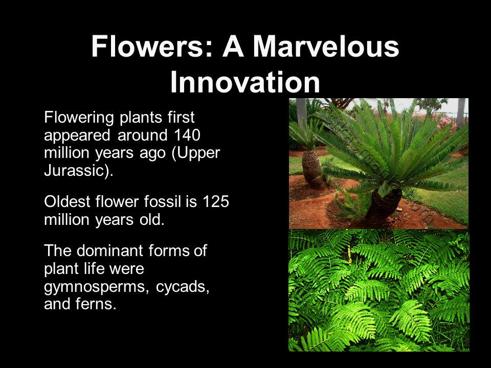 Flowers: A Marvelous Innovation