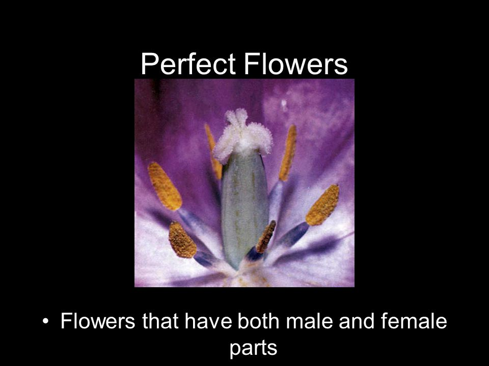 Flowers that have both male and female parts