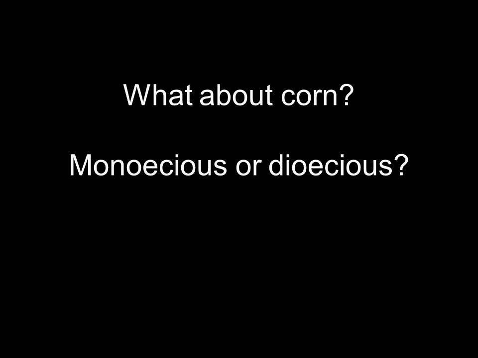 What about corn Monoecious or dioecious