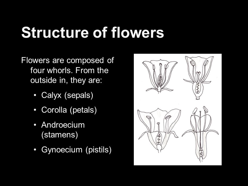Structure of flowers Flowers are composed of four whorls. From the outside in, they are: Calyx (sepals)