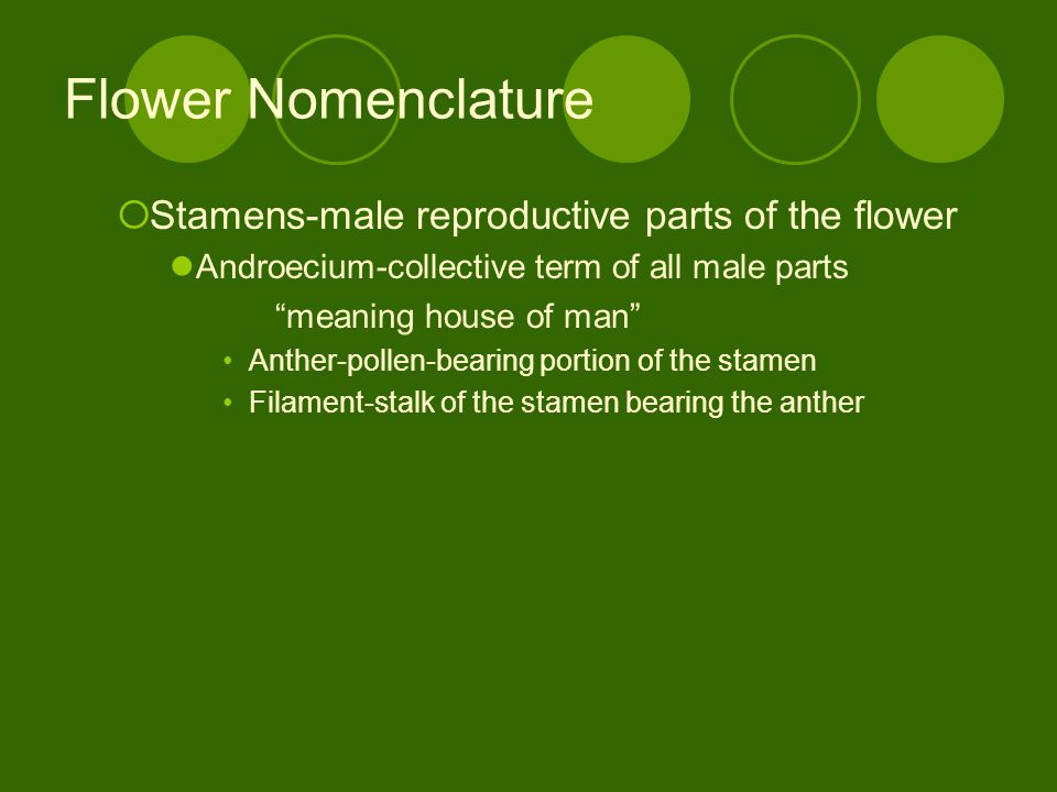 Flower Nomenclature Stamens-male reproductive parts of the flower