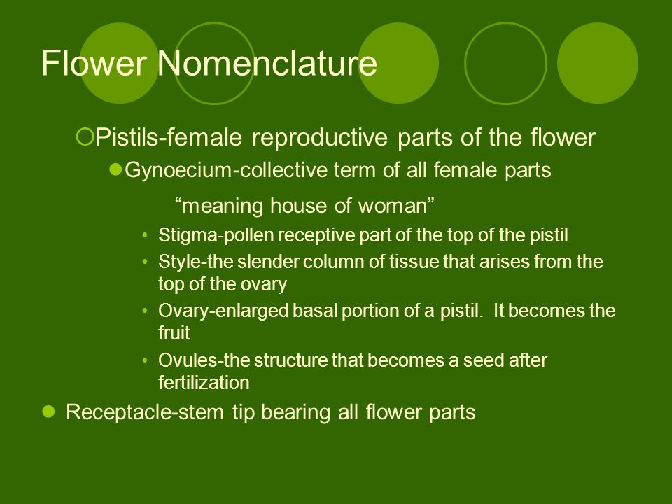 Flower Nomenclature Pistils-female reproductive parts of the flower