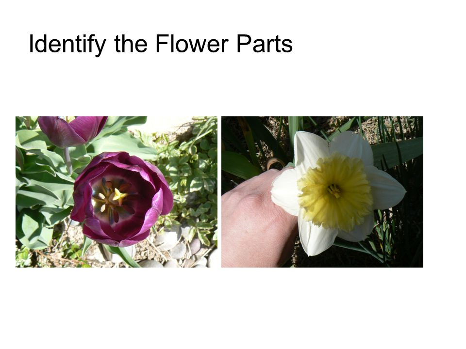 Identify the Flower Parts