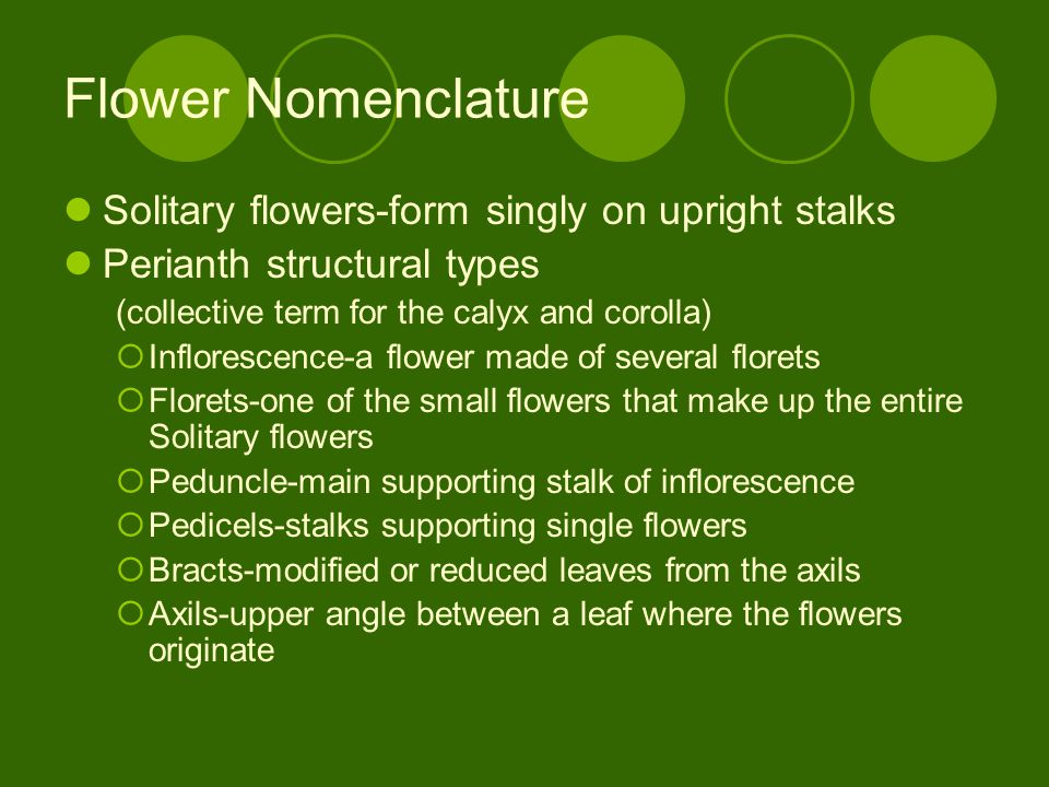 Flower Nomenclature Solitary flowers-form singly on upright stalks