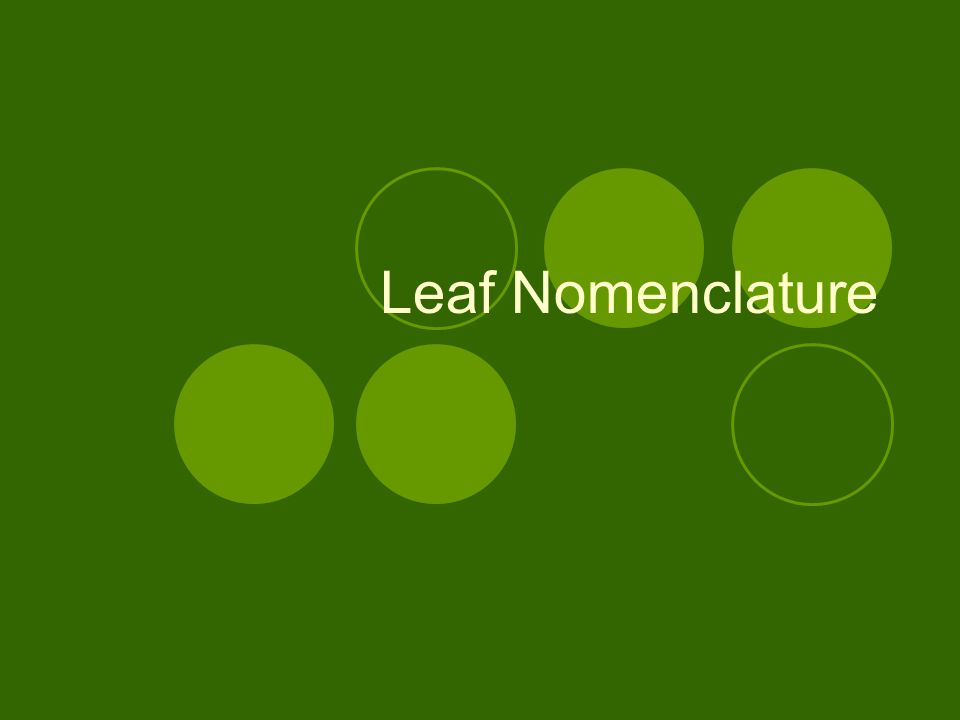 Leaf Nomenclature
