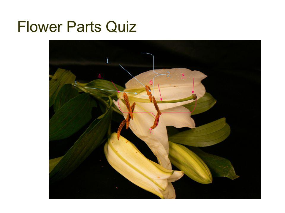 Flower Parts Quiz 4. 5. 7. 6. 1. 3. 2.