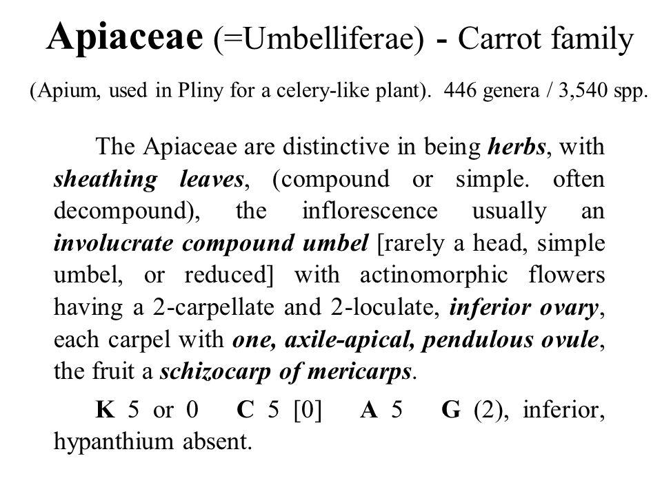 Apiaceae (=Umbelliferae) - Carrot family (Apium, used in Pliny for a celery-like plant). 446 genera / 3,540 spp.