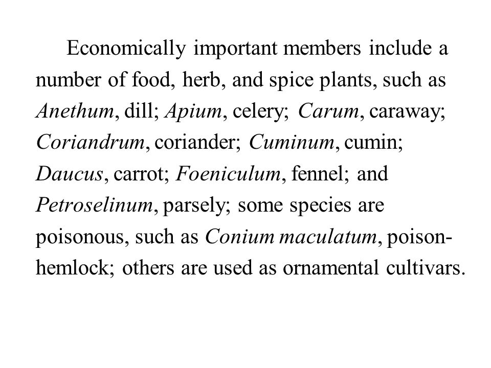 Economically important members include a number of food, herb, and spice plants, such as Anethum, dill; Apium, celery; Carum, caraway; Coriandrum, coriander; Cuminum, cumin; Daucus, carrot; Foeniculum, fennel; and Petroselinum, parsely; some species are poisonous, such as Conium maculatum, poison-hemlock; others are used as ornamental cultivars.