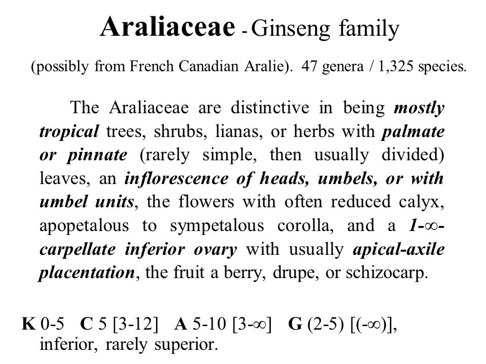 Araliaceae - Ginseng family (possibly from French Canadian Aralie)