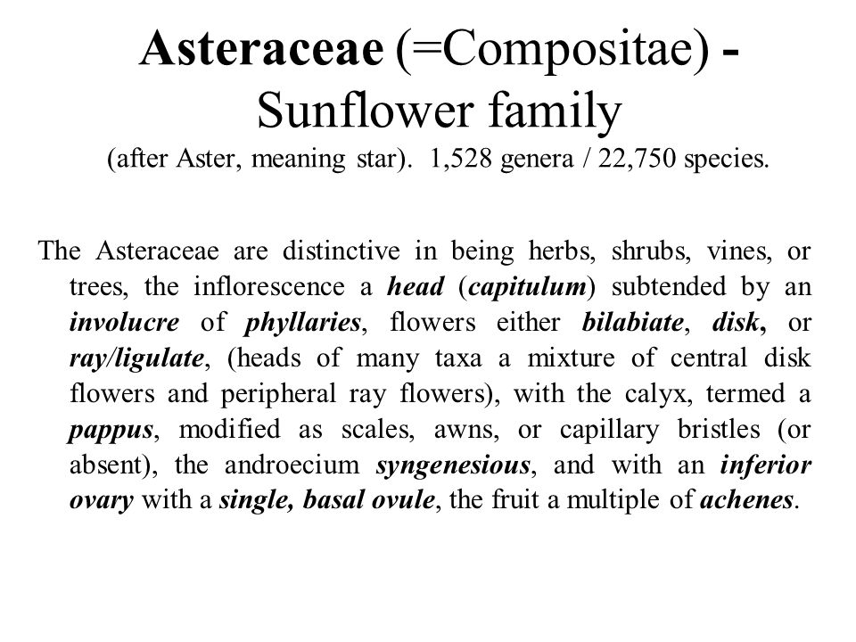 Asteraceae (=Compositae) - Sunflower family (after Aster, meaning star). 1,528 genera / 22,750 species.